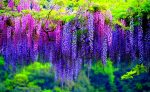 Древовидные цветы в саду фото и названия