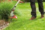 Нужно ли стричь газон на зиму