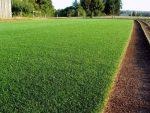 Время посадки травы газонной
