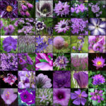 Фиолетовые цветы садовые