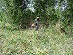 Выкосить траву